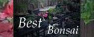 best_bonsai